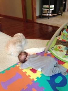 Dog: still boy's best friend