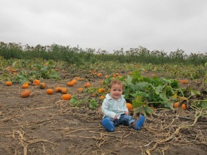 Baby's first pumpkin patch